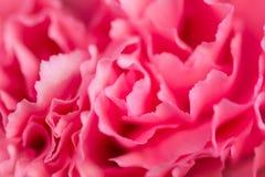 Fond rose abstrait de fleur de pivoine utilisé comme illustr de fond Photos libres de droits