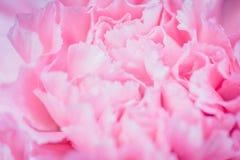 Fond rose abstrait de fleur de pivoine utilisé comme illustr de fond Photo libre de droits