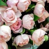 Fond rose de Rose Photos stock