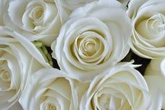 Fond rose de blanc Images stock