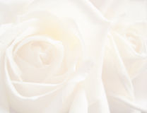 Fond rose de blanc Photo stock