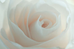 Fond rose de blanc photo libre de droits