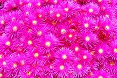 Fond rose de fleur Images stock