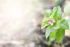 Fond rose de fleur Belles fleurs avec des filtres de couleur Photos stock