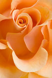 Fond rose de jaune Photos stock