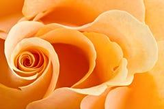Fond rose de jaune Photographie stock