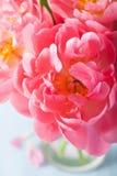 Fond rose de macro de pétales de fleur de pivoine photographie stock libre de droits