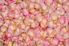 Fond rose de pétale rose Photo libre de droits
