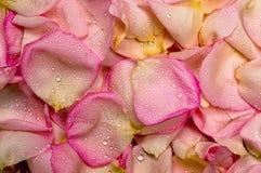 Fond rose de pétale rose Photographie stock libre de droits