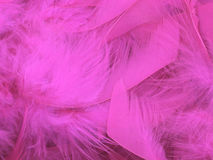 Fond rose de plume Photographie stock libre de droits
