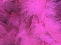 Fond rose de plume Photos libres de droits