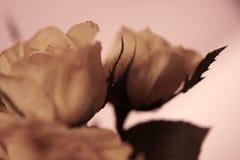 Fond rose de rose Images libres de droits