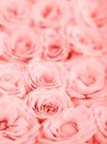 Fond rose de roses image libre de droits