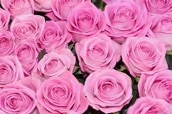 Fond rose de roses de mes milieux floraux Photos stock