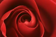 Fond rose de rouge images libres de droits