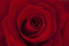 Fond rose de rouge Photographie stock