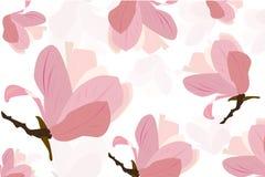 Fond rose de vecteur de fleur de magnolia Images stock