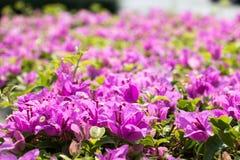 Fond rose 454 de vue de fleur Photos stock