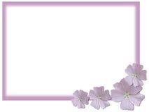 Fond rose et blanc Images libres de droits