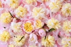 Fond rose et jaune coloré de fleurs Image stock