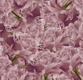Fond rose floral de vintage beau Composition de fleur Bouquet des fleurs des roses rose-clair Plan rapproché Photo libre de droits