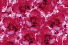 Fond rose floral des roses Composition de fleur Fleurs avec des gouttelettes d'eau sur des pétales Plan rapproché Images stock