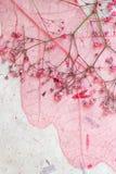 Fond rose rêveur de feuille Image stock