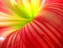 Fond rouge de fleur Photo stock
