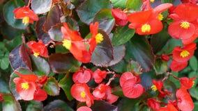Fond rouge de fleur Images stock
