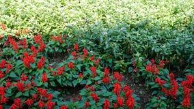 Fond rouge de fleur Photographie stock