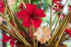 Fond rouge de fleur dehors en nature d'île de Bali, Indonésie Photo libre de droits