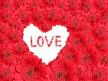 Fond rouge de marguerite de gerber avec le coeur blanc d'amour Photos libres de droits