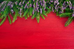 Fond rouge de Noël Branches d'arbre de sapin et bruyère commune f Images stock