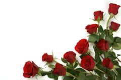 Fond rouge de roses Photo libre de droits