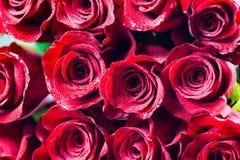 Fond rouge de roses Photos libres de droits