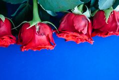 Fond rouge de roses photographie stock