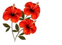 Fond rouge de trois fleurs Photo stock