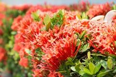 Fond rouge de vue de fleur Photos stock