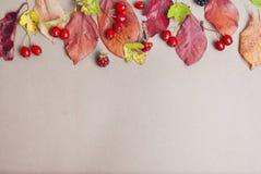 Fond rouge et jaune d'automne de feuilles avec l'espace de copie Concept de chute Vue supérieure photos stock