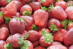 Fond rouge frais de plan rapproché de fraise Fin de fraise de texture  Photos libres de droits