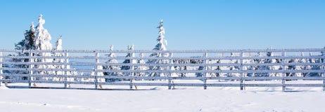 Fond rural d'hiver de vacances avec les pins blancs, barrière, champ de neige, montagnes photo libre de droits