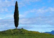 Fond rural Un cyprès simple sur une petite colline avec un ciel bleu nuageux Photo libre de droits
