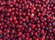 Fond rustique avec les canneberges colorées savoureuses rouges, vue supérieure Foyer mou, photo de canneberge de plan rapproché p Image stock