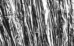 Fond rustique d'herbe de texture noire et blanche de silhouette Images libres de droits