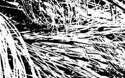 Fond rustique d'herbe de texture noire et blanche de silhouette Photos libres de droits