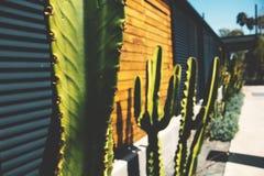 Fond rustique de cactus image libre de droits