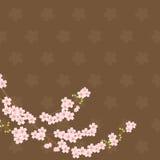 fond sakura brun Images stock