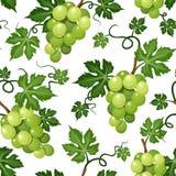 Fond sans couture avec des raisins verts Illustration de vecteur Photo libre de droits