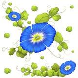 Fond sans couture avec les fleurs bleues de gloire de matin illustration de vecteur