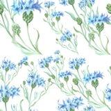 Fond sans couture cornflowers Collage des fleurs et des feuilles wallpaper Employez les matériaux imprimés, signes, affiches, car Photo stock
